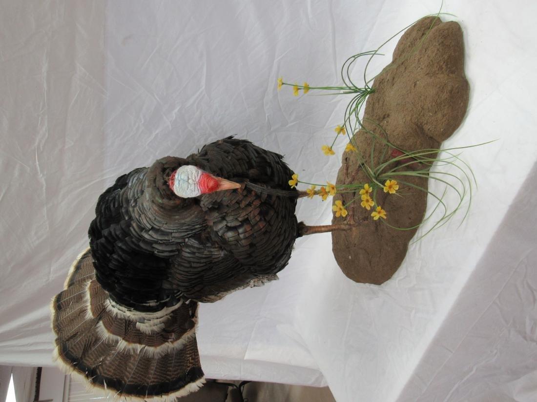 Taxidermy Gobbler Turkey Mount - 4