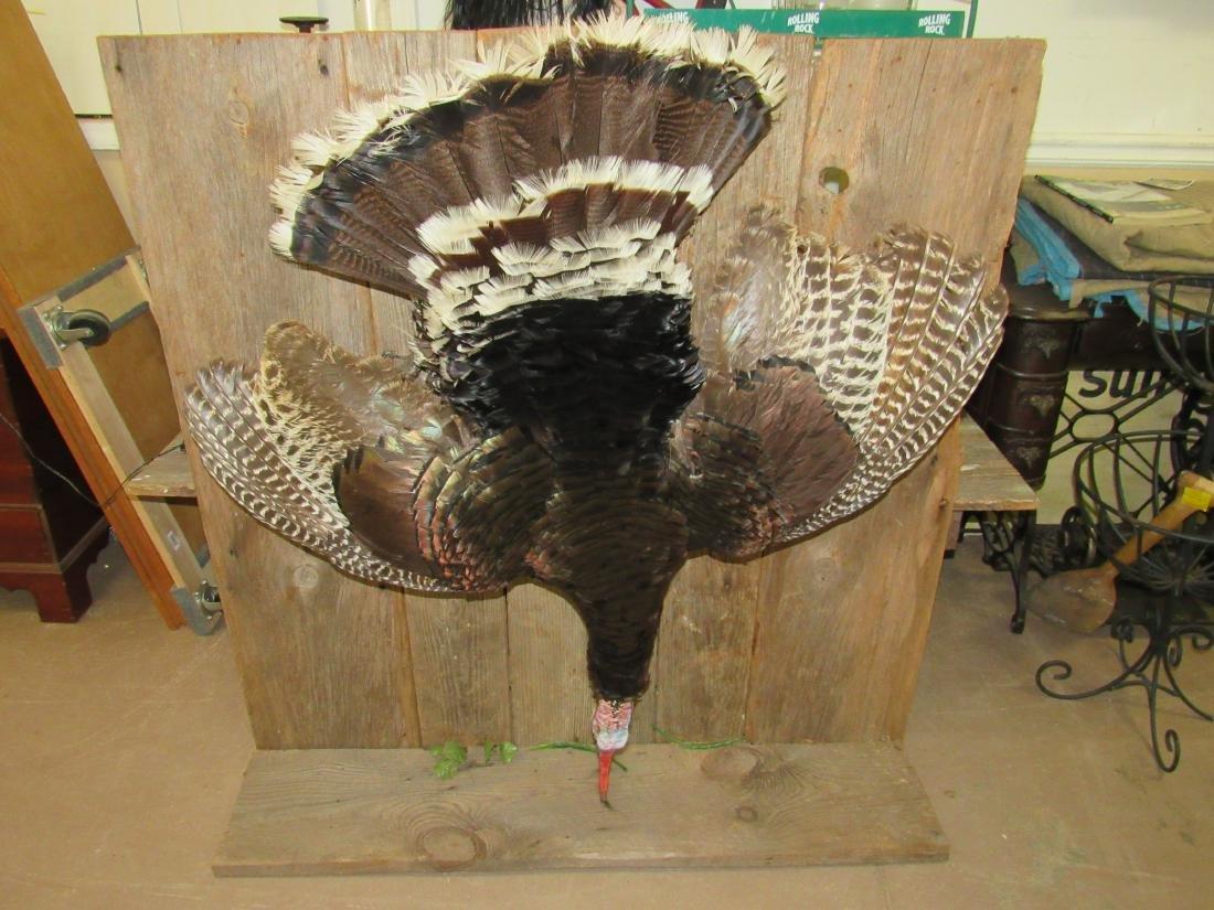 Taxidermy Turkey Hanging from Barn Wood