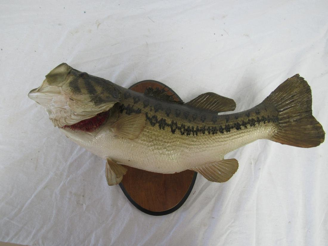 Taxidermy Largemouth Bass on Wooden Plaque