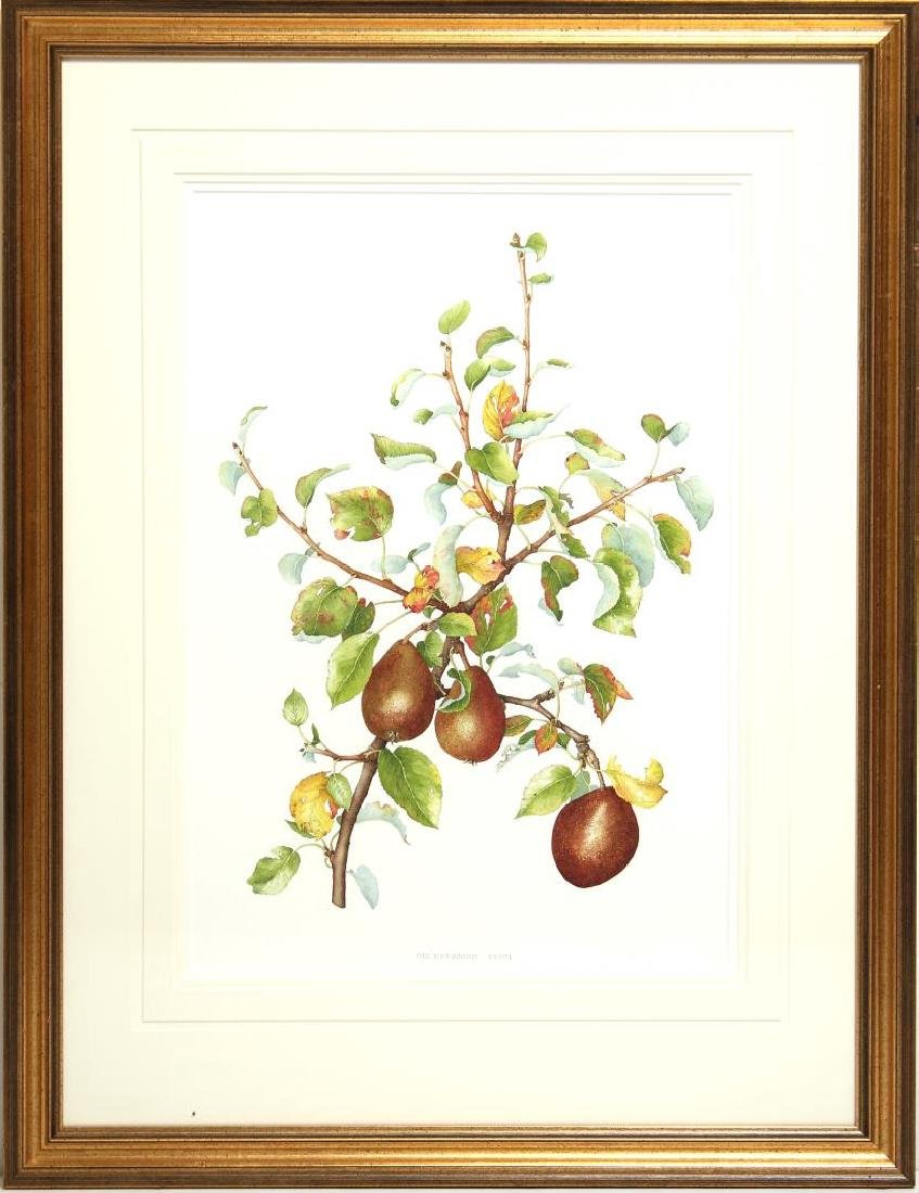 Signed B. Gillespie- Botanical Watercolor