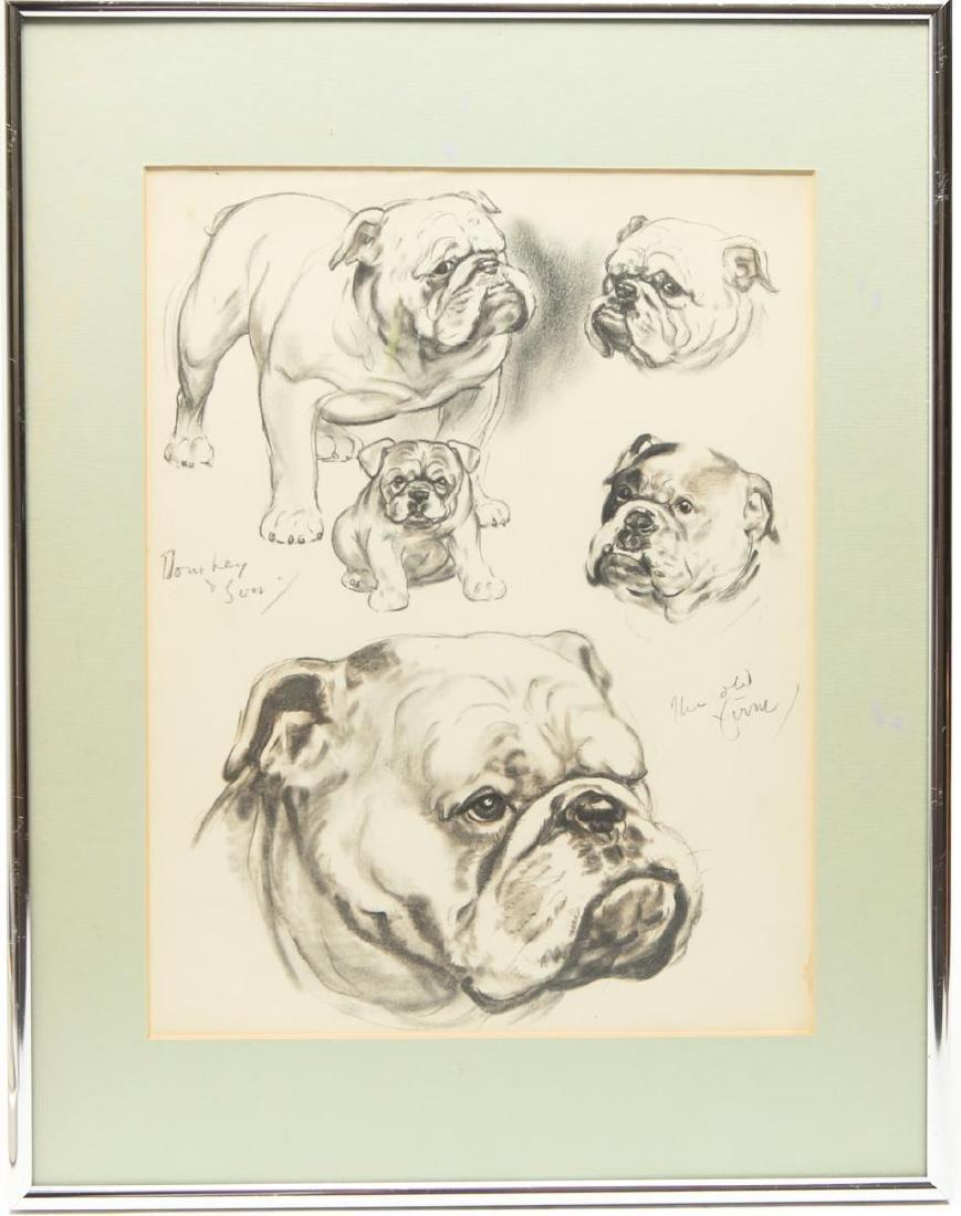 Study of a Bulldog, Dog Portrait Sketches, Print