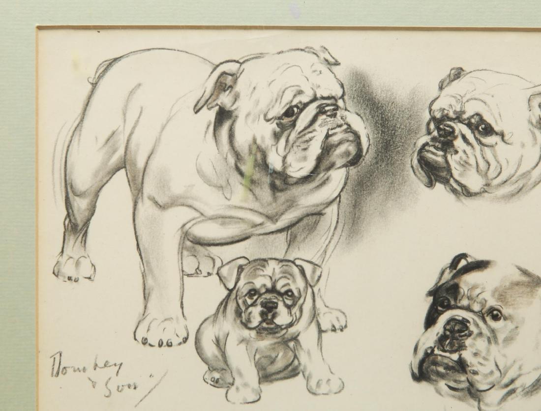 Study of a Bulldog, Dog Portrait Sketches, Print - 2