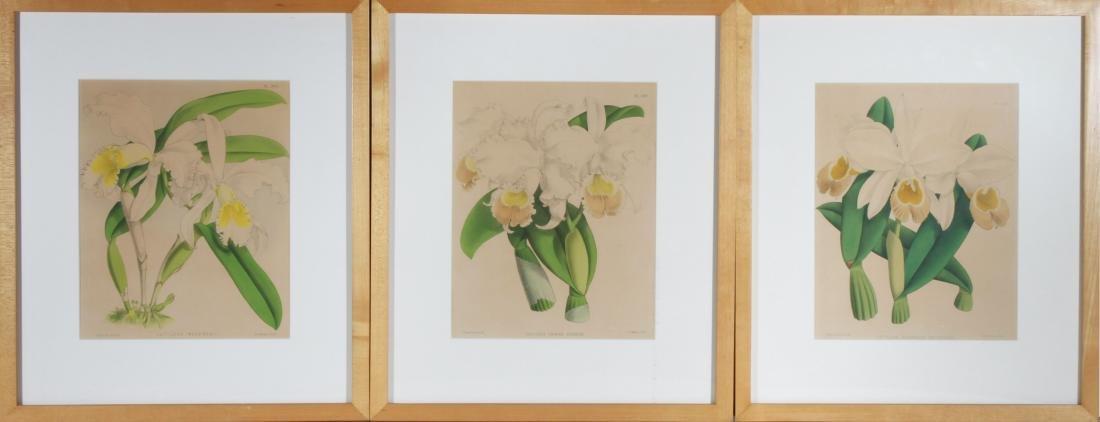 John Nugent After Fitch Orchid Botanicals Lithos, 3