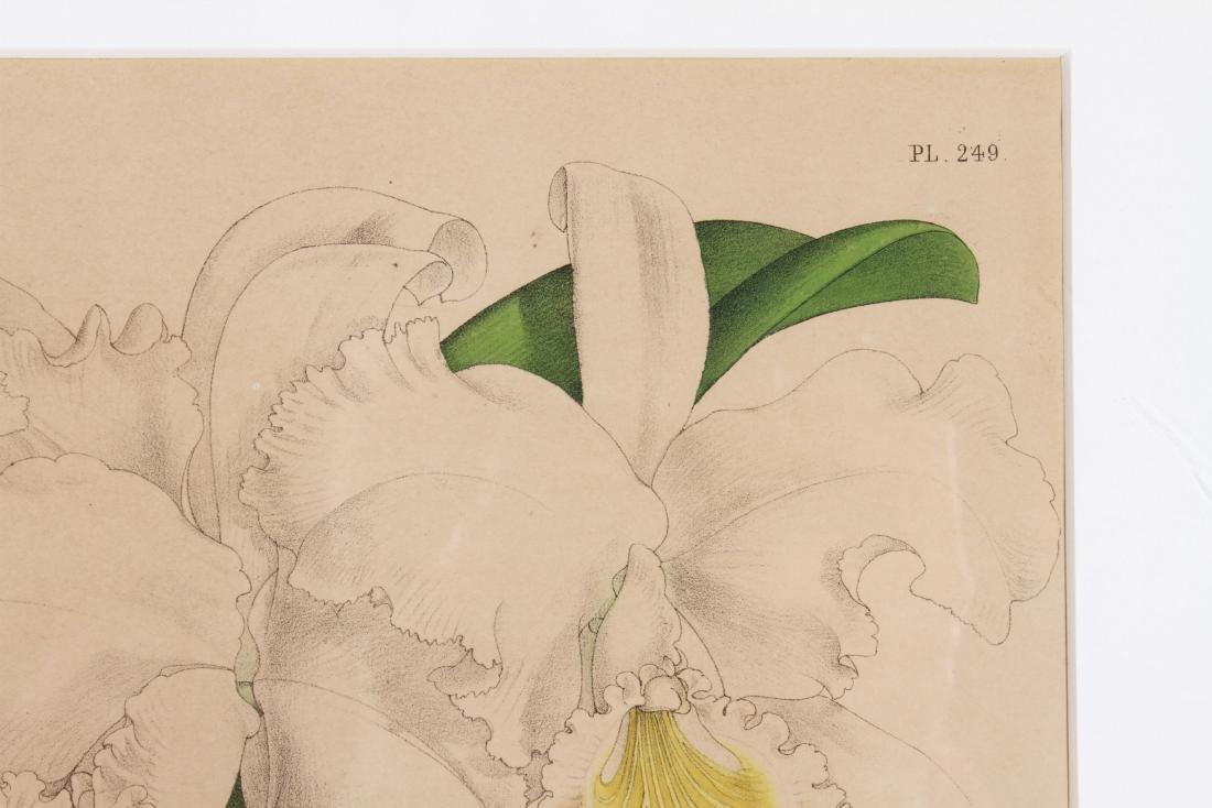 John Nugent After Fitch Orchid Botanicals Lithos, 3 - 6