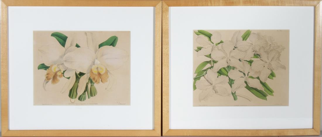 John Nugent After Fitch Orchid Botanicals Lithos, 2