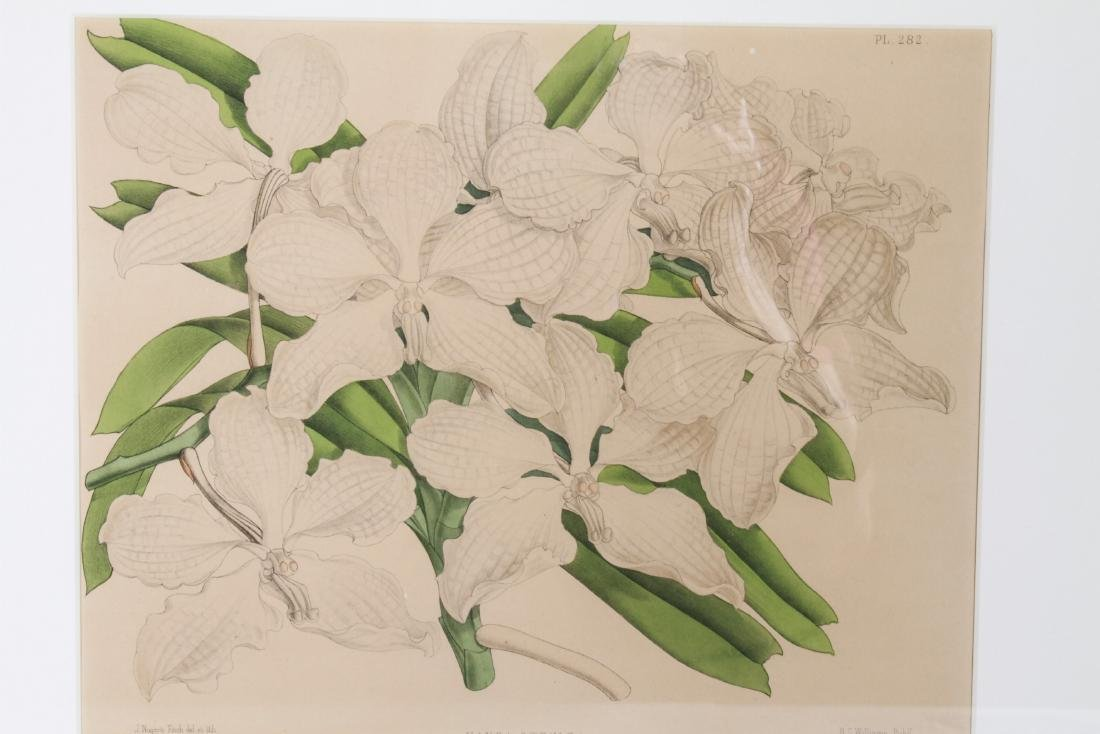 John Nugent After Fitch Orchid Botanicals Lithos, 2 - 3