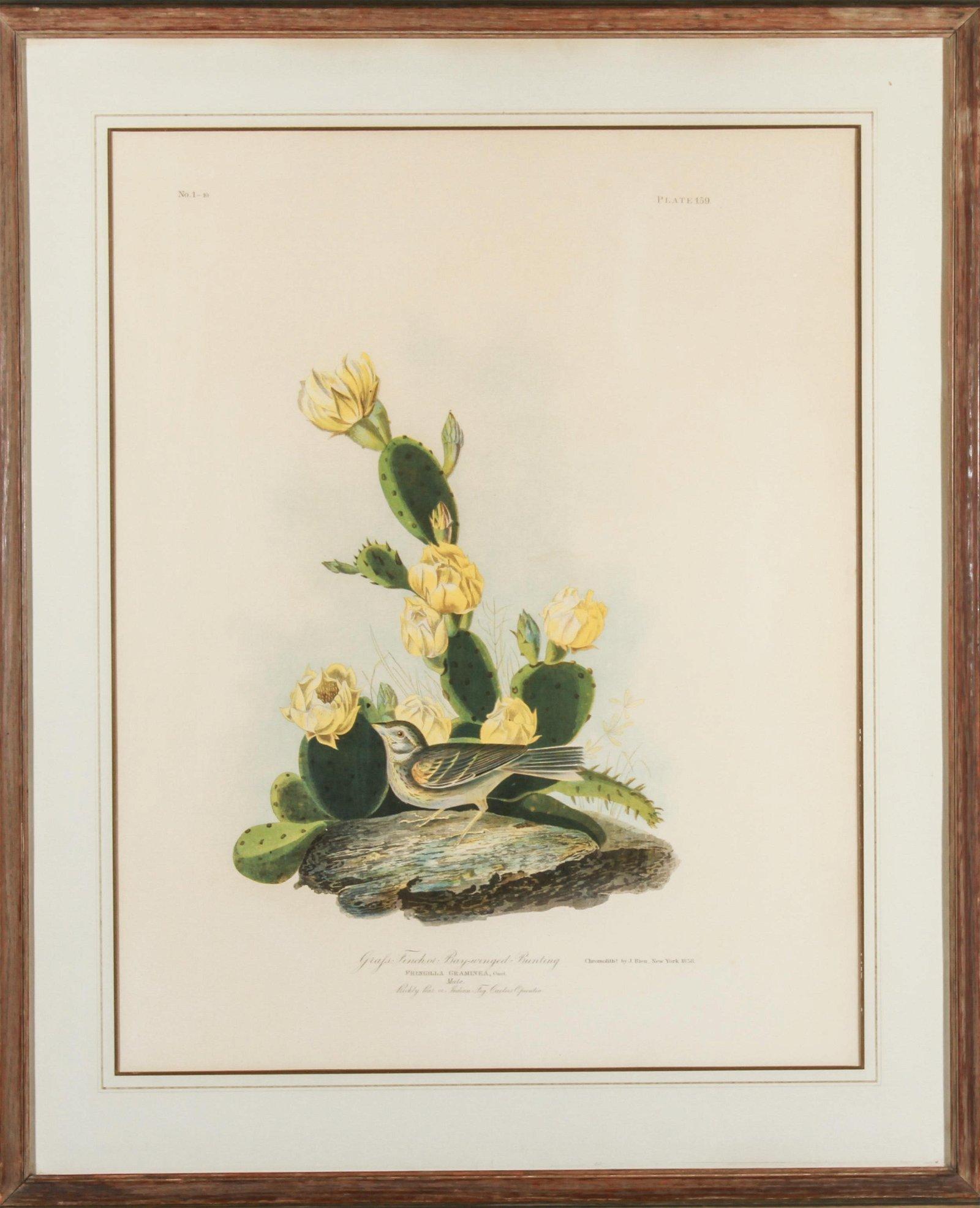 """After Audubon """"Grafs Finch"""" Lithograph"""