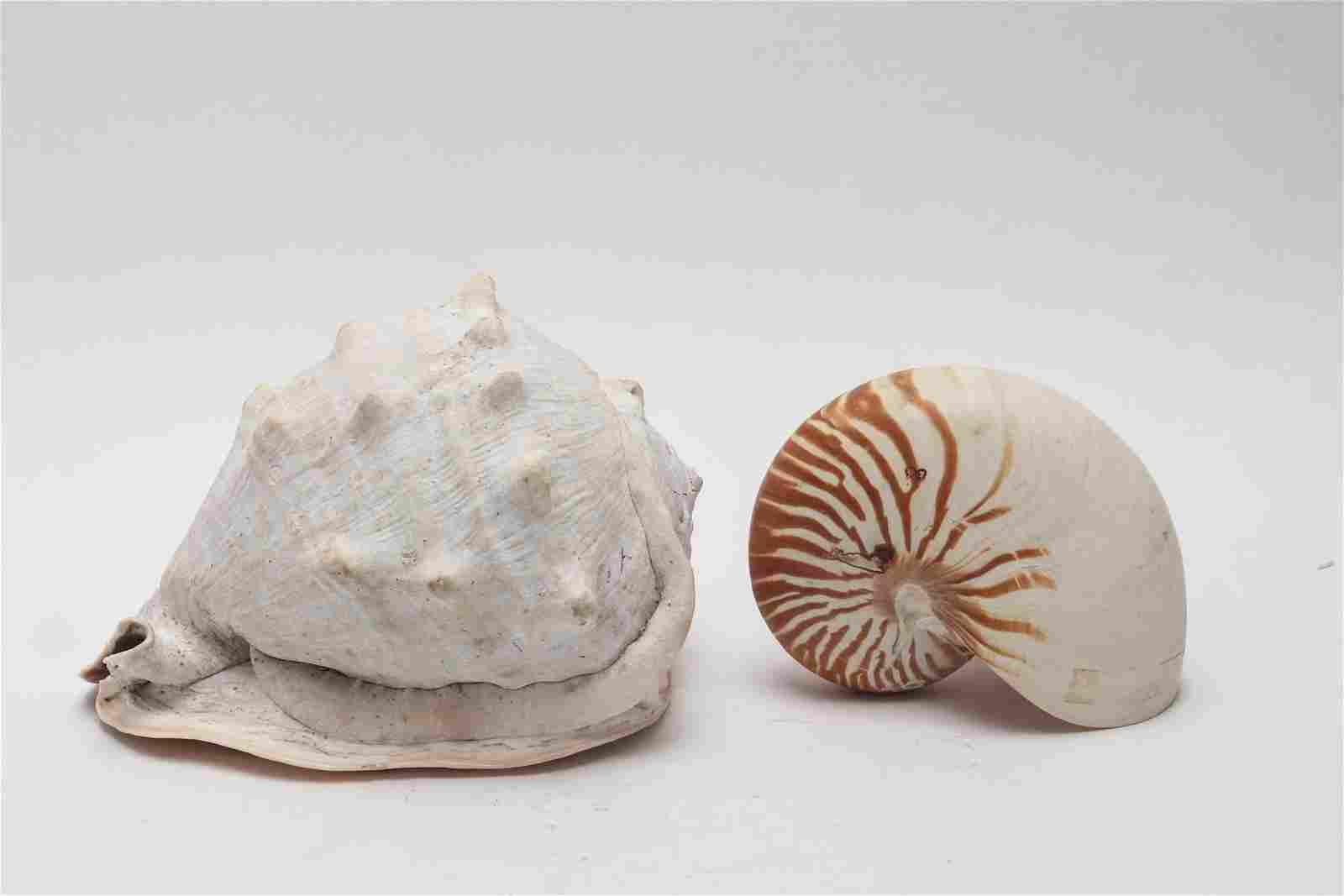 Sea Shells, 2