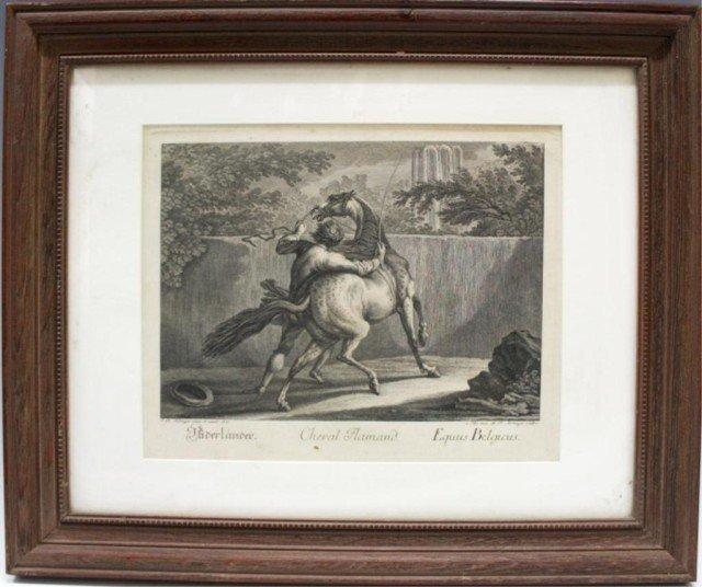 """Cheval Flamand"" Engraving"