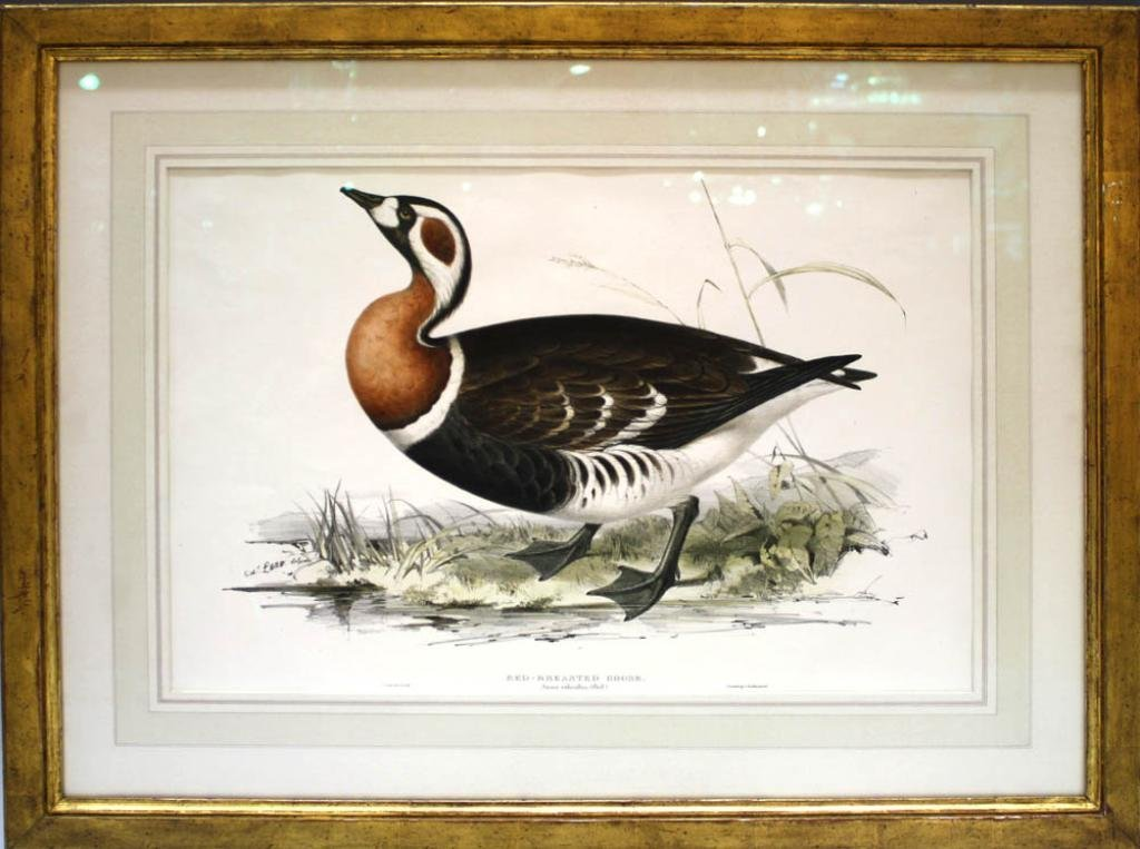Edward Lear Red Breasted Goose Colored Lithograph