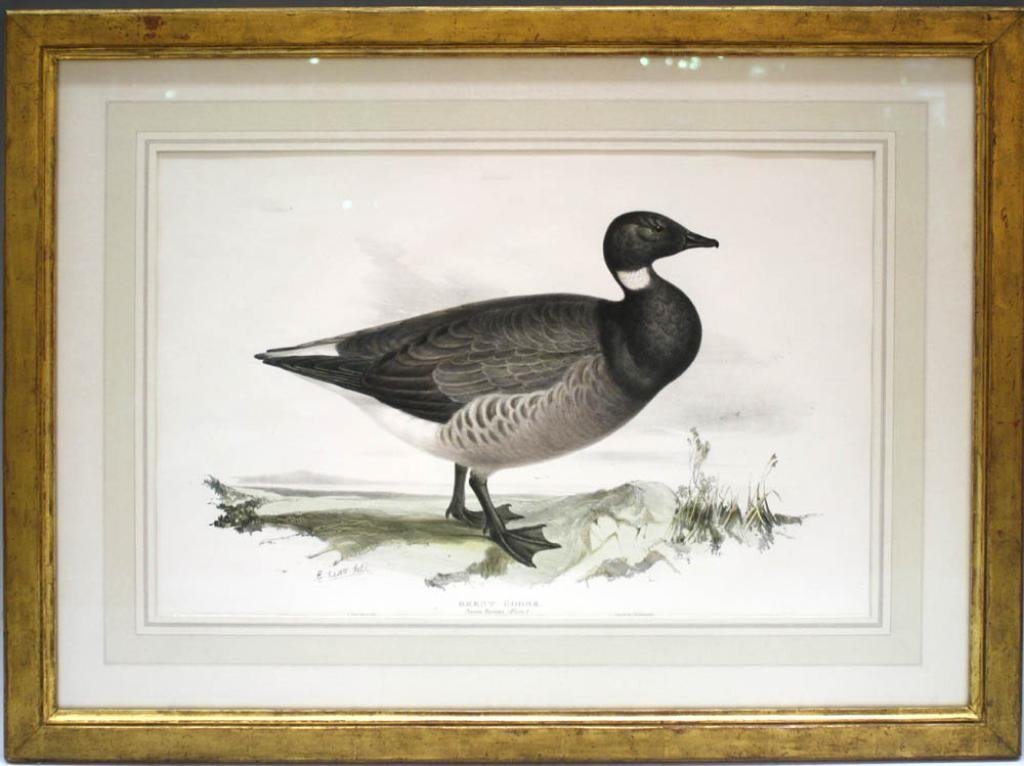 Edward Lear Brent Goose Colored Lithograph