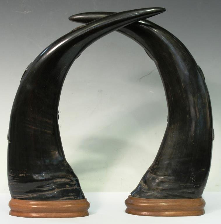 Pair of Southeast Asian Carved Water Buffalo Horns - 2