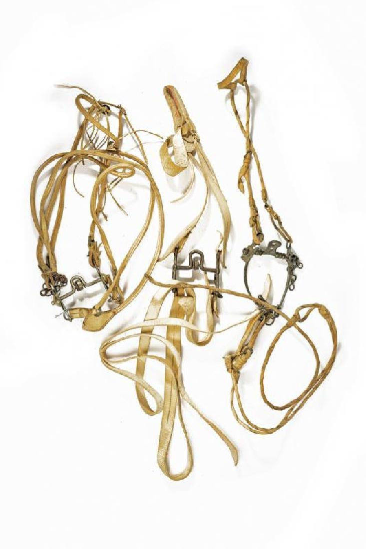 A lot of bridles for gaucho