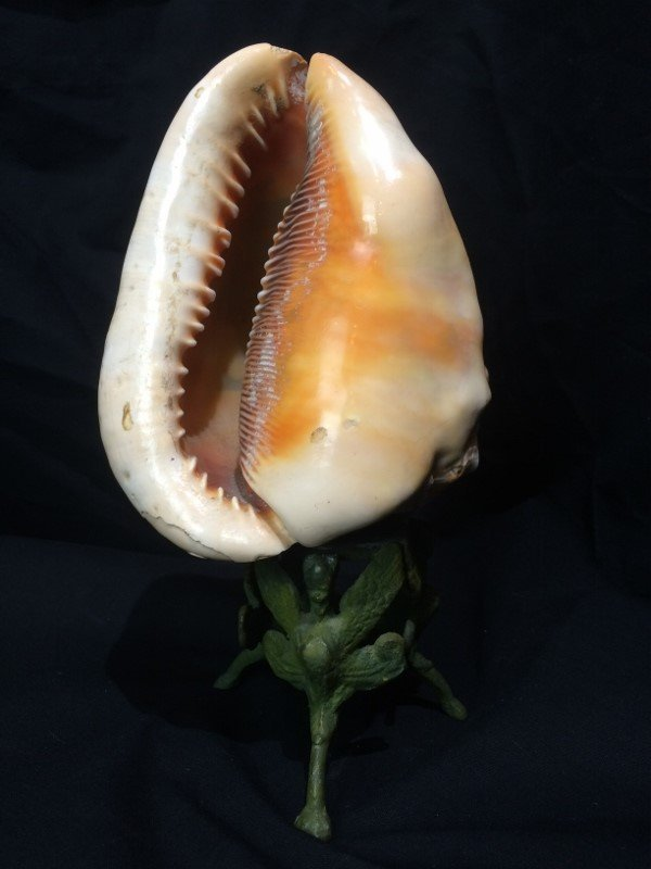 Carved conch shell, scene of Italian coast, circa 1900 - 5