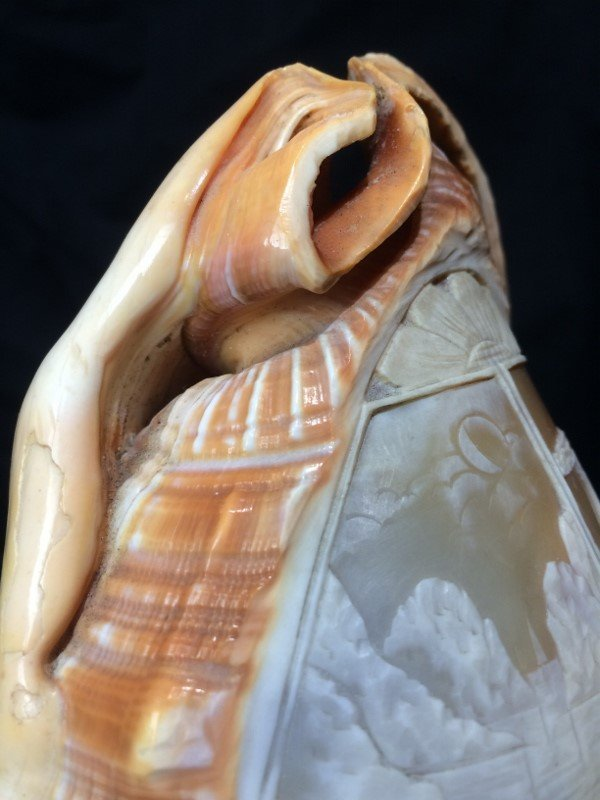 Carved conch shell, scene of Italian coast, circa 1900 - 9