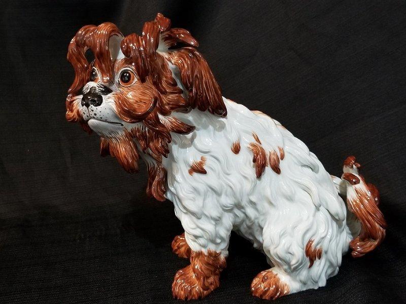 Meissen Bolognese Terrier