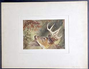 Watercolor of  deer head by Alfred Jones, c.1836