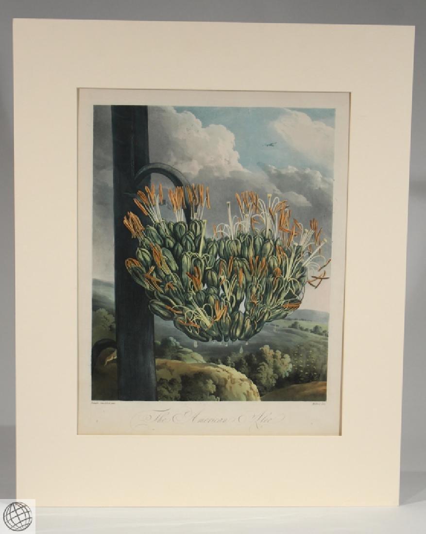 American Aloe ROBERT JOHN THORNTON Hand Colored