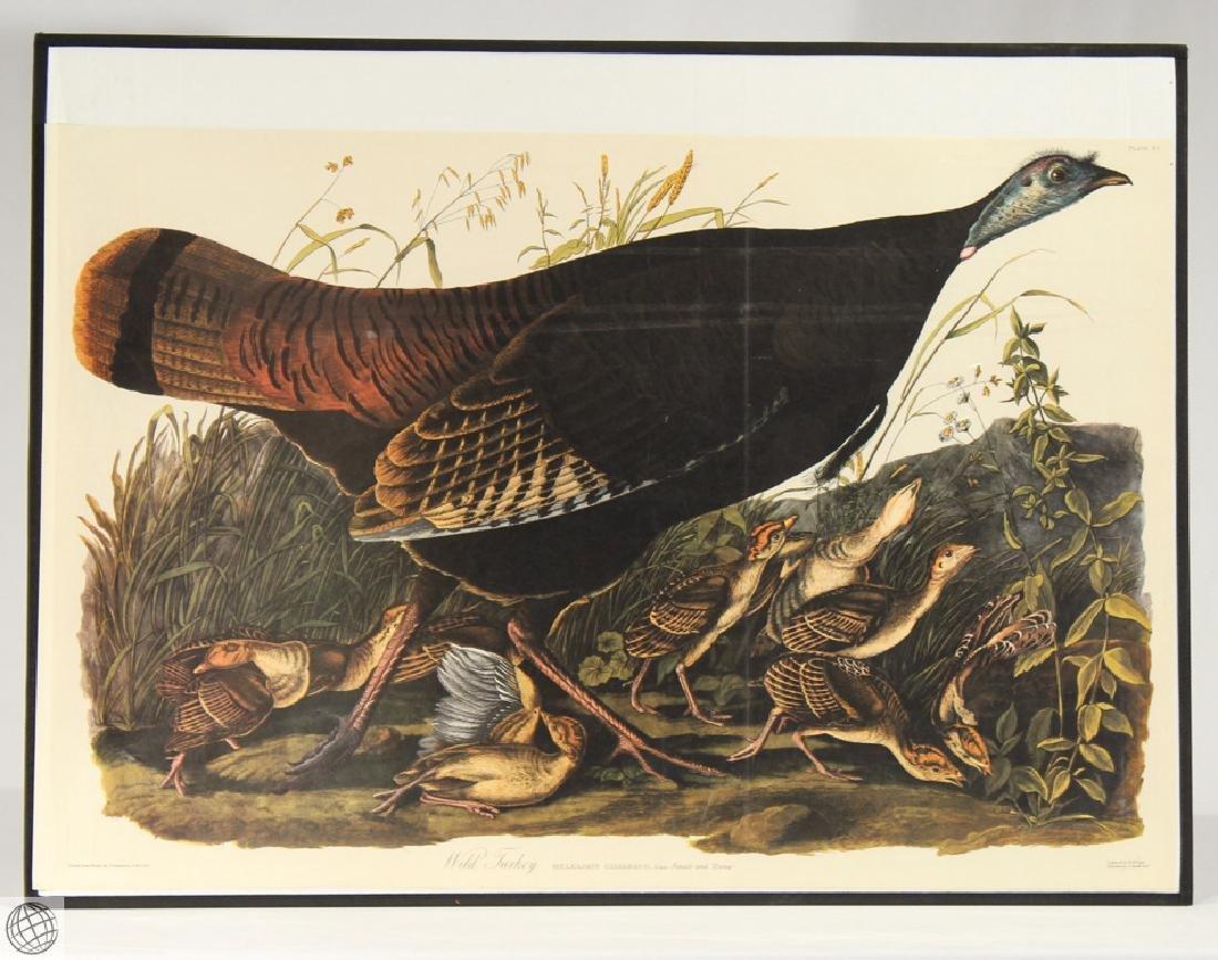 Female Wild Turkey JOHN JAMES AUDUBON Birds Of America
