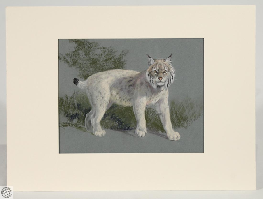 Lynx HOWARD L. MUNNS Original Pastel Portrait 1971