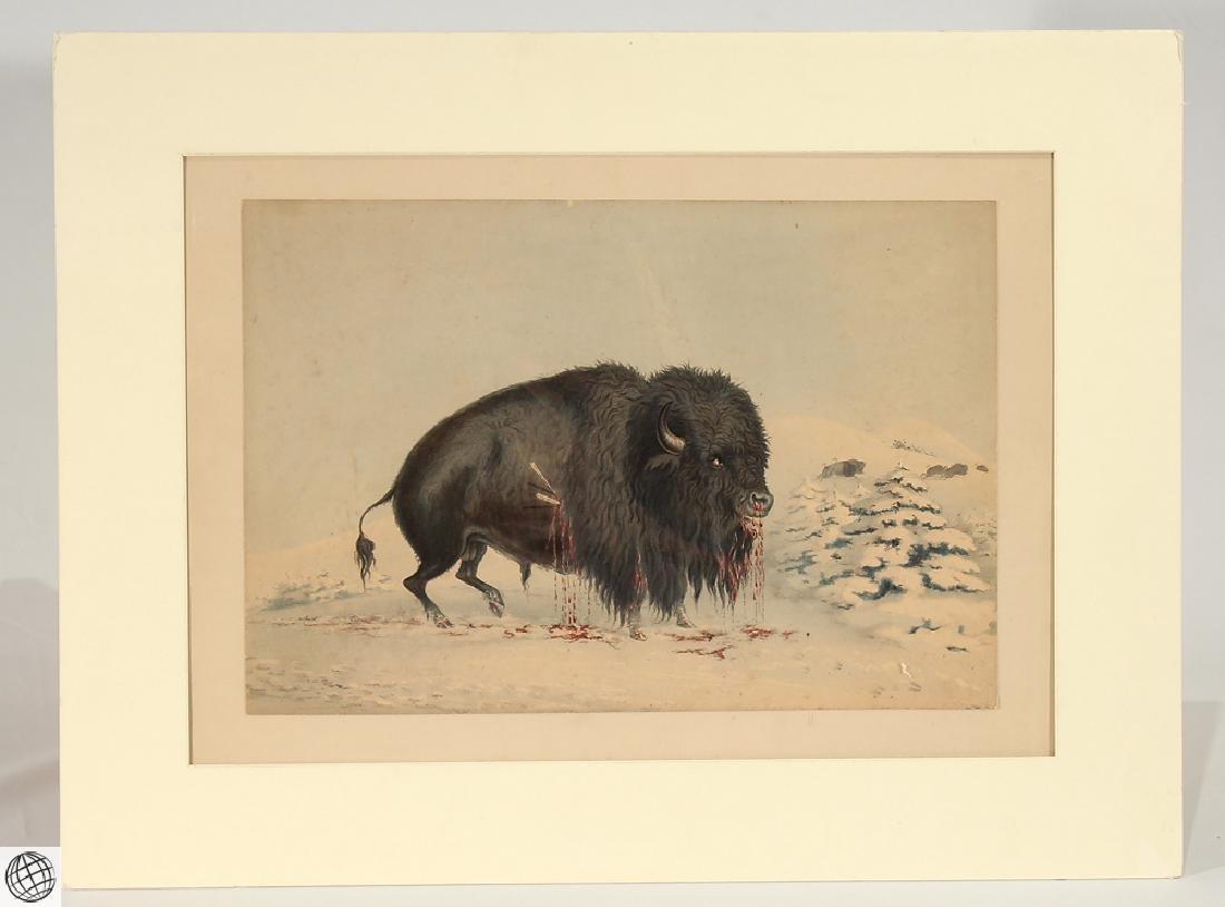 Wounded Buffalo Bull GEORGE CATLIN Bohn 1844 Hand