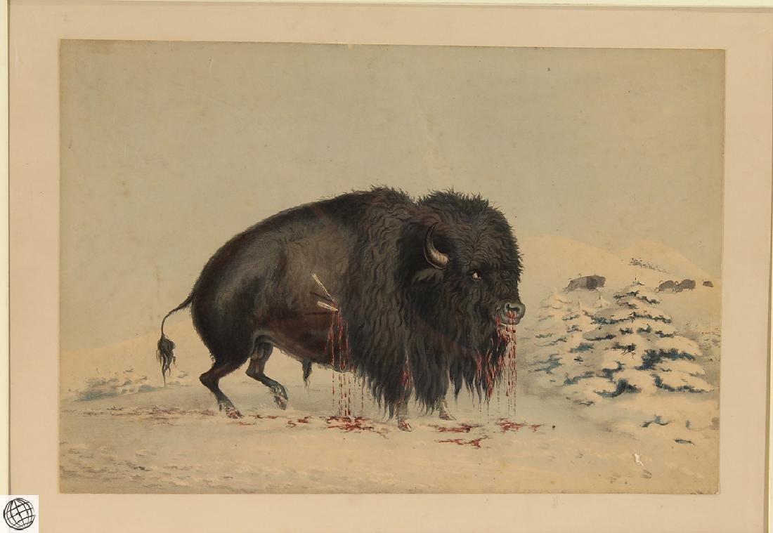 Wounded Buffalo Bull GEORGE CATLIN Bohn 1844 Hand - 2