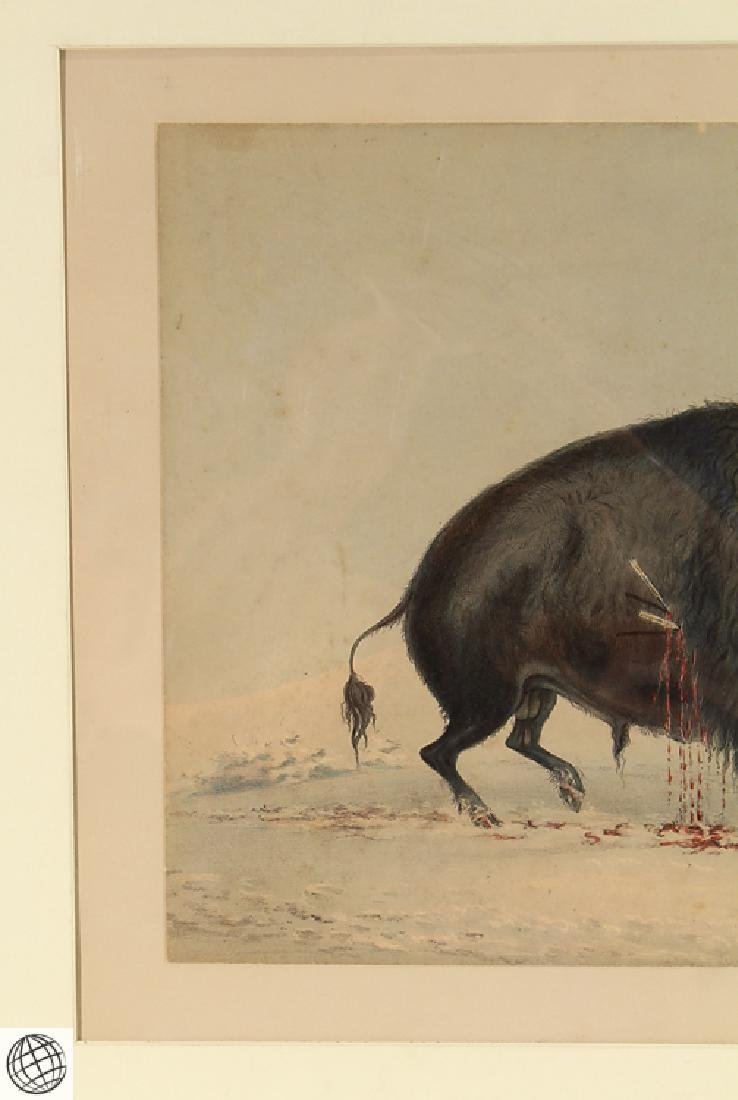 Wounded Buffalo Bull GEORGE CATLIN Bohn 1844 Hand - 3
