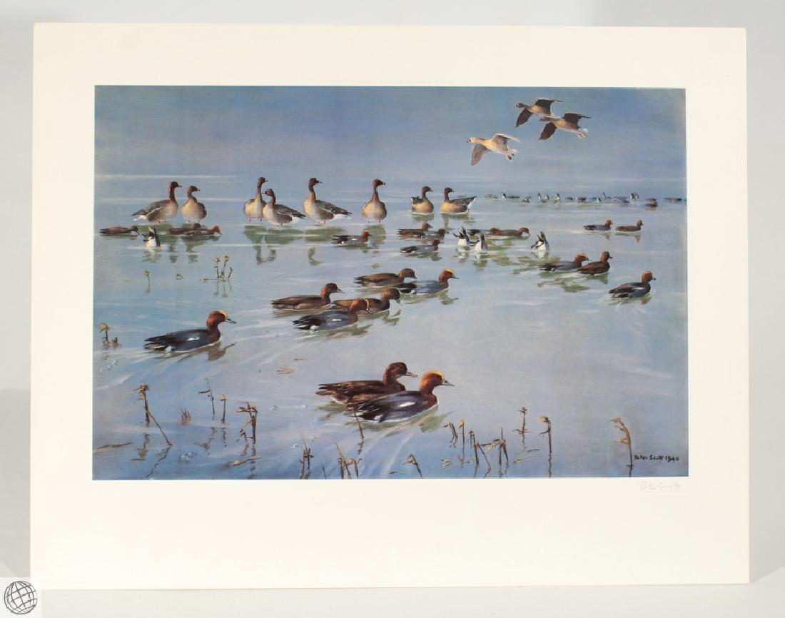 Widgeon Geese SCOTT Sir Peter Markham Color Offset