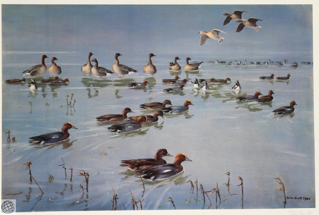 Widgeon Geese SCOTT Sir Peter Markham Color Offset - 2