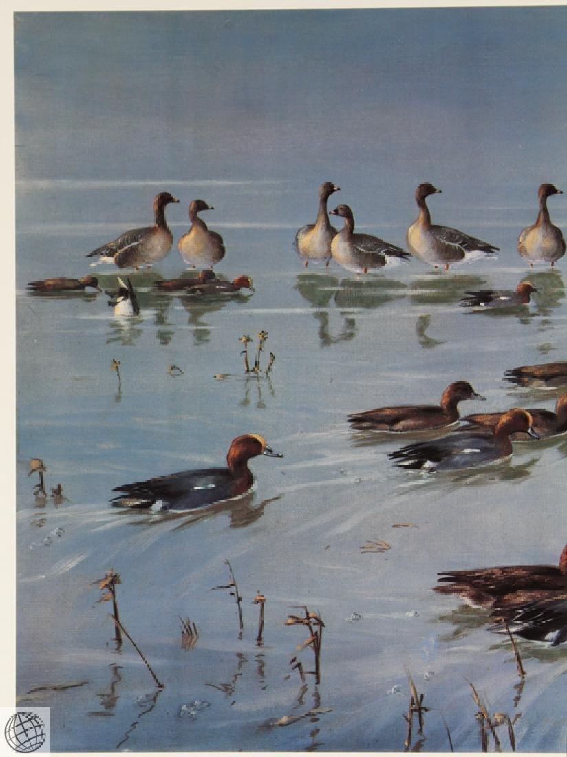 Widgeon Geese SCOTT Sir Peter Markham Color Offset - 3