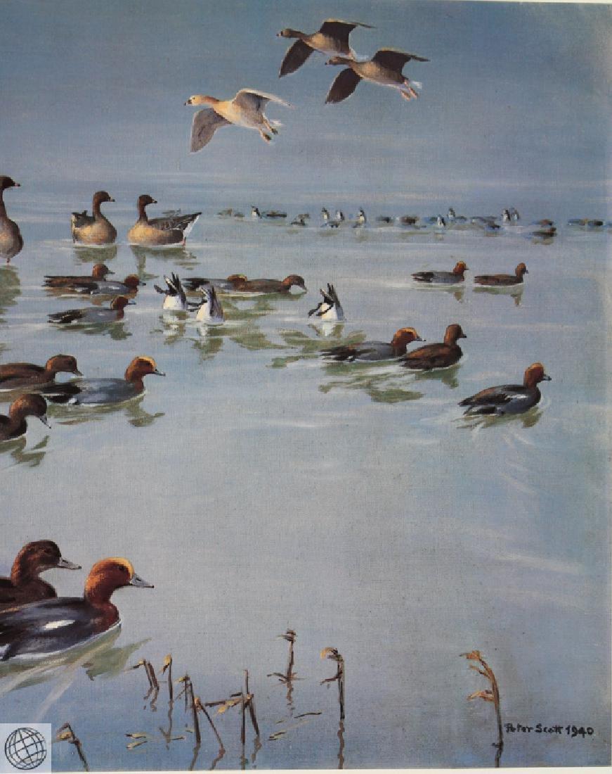 Widgeon Geese SCOTT Sir Peter Markham Color Offset - 4