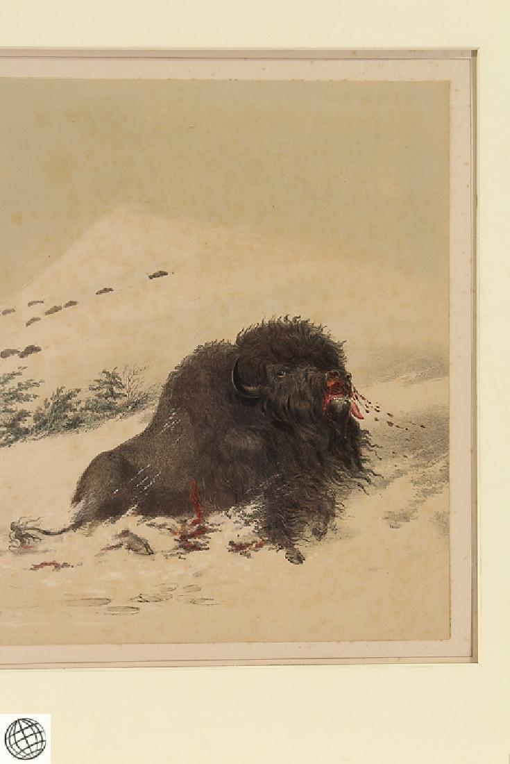 Dying Buffalo Bull GEORGE CATLIN Bohn 1844 Hand Colored - 5