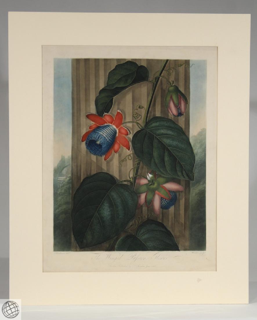 Winged Passion Flower ROBERT JOHN THORNTON Hand Colored