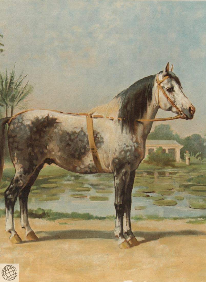 Sandlewood OTTO EERELMAN Color Lithograph Goffart Horse - 3