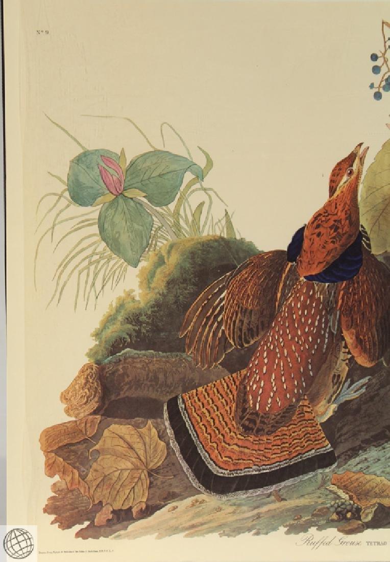 Ruffled Grouse JOHN JAMES AUDUBON Birds Of America - 2