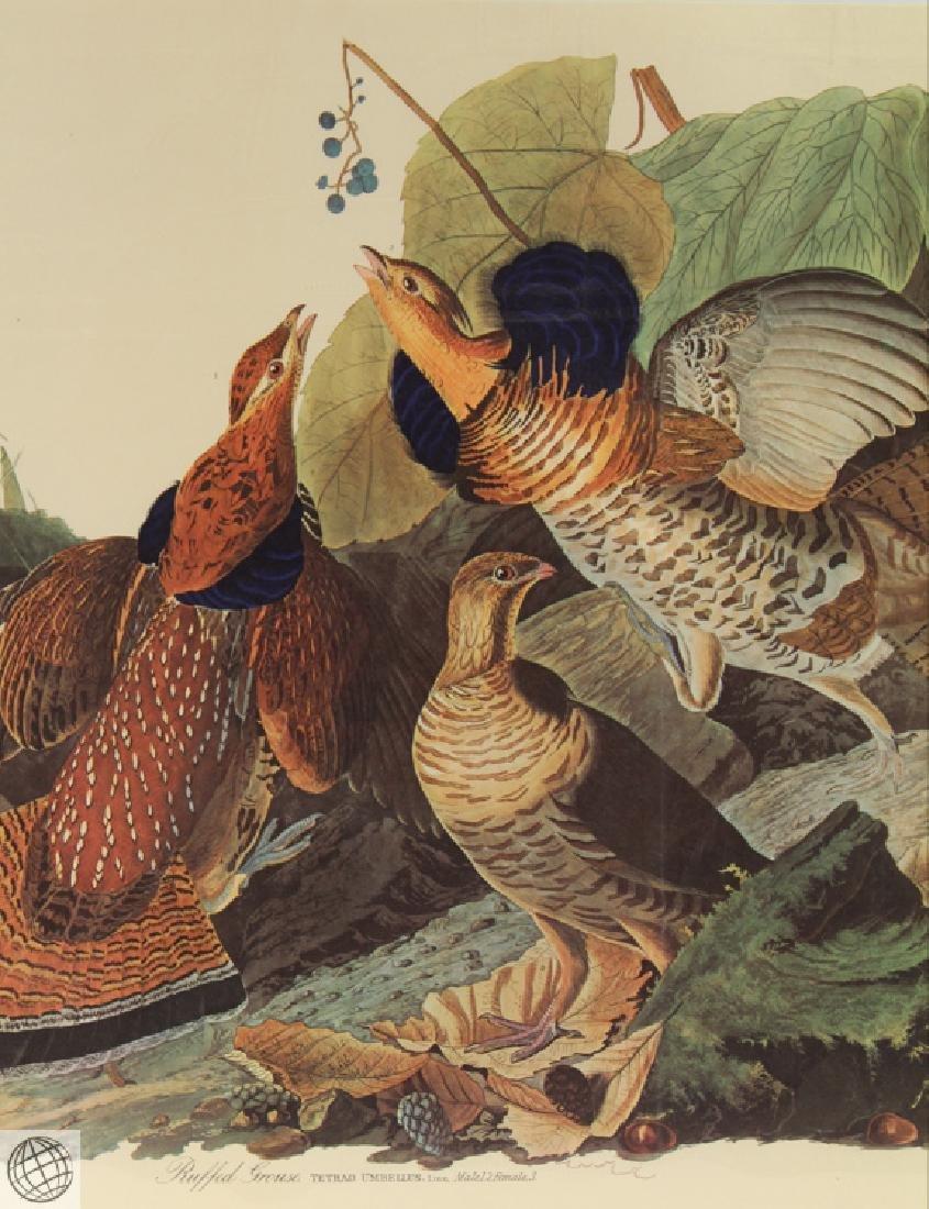Ruffled Grouse JOHN JAMES AUDUBON Birds Of America - 3