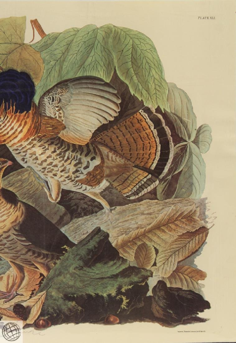 Ruffled Grouse JOHN JAMES AUDUBON Birds Of America - 4