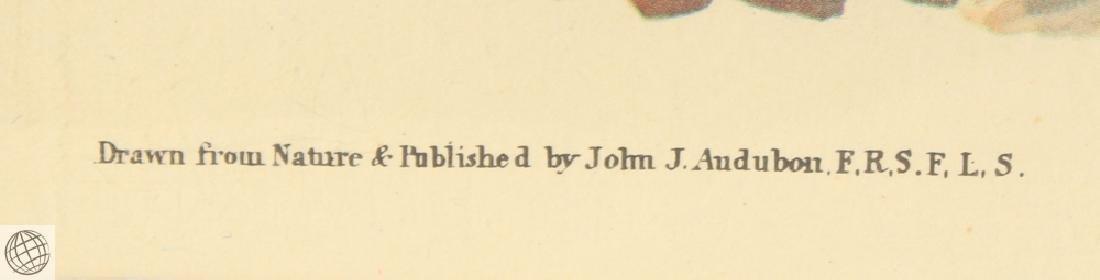 Ruffled Grouse JOHN JAMES AUDUBON Birds Of America - 6