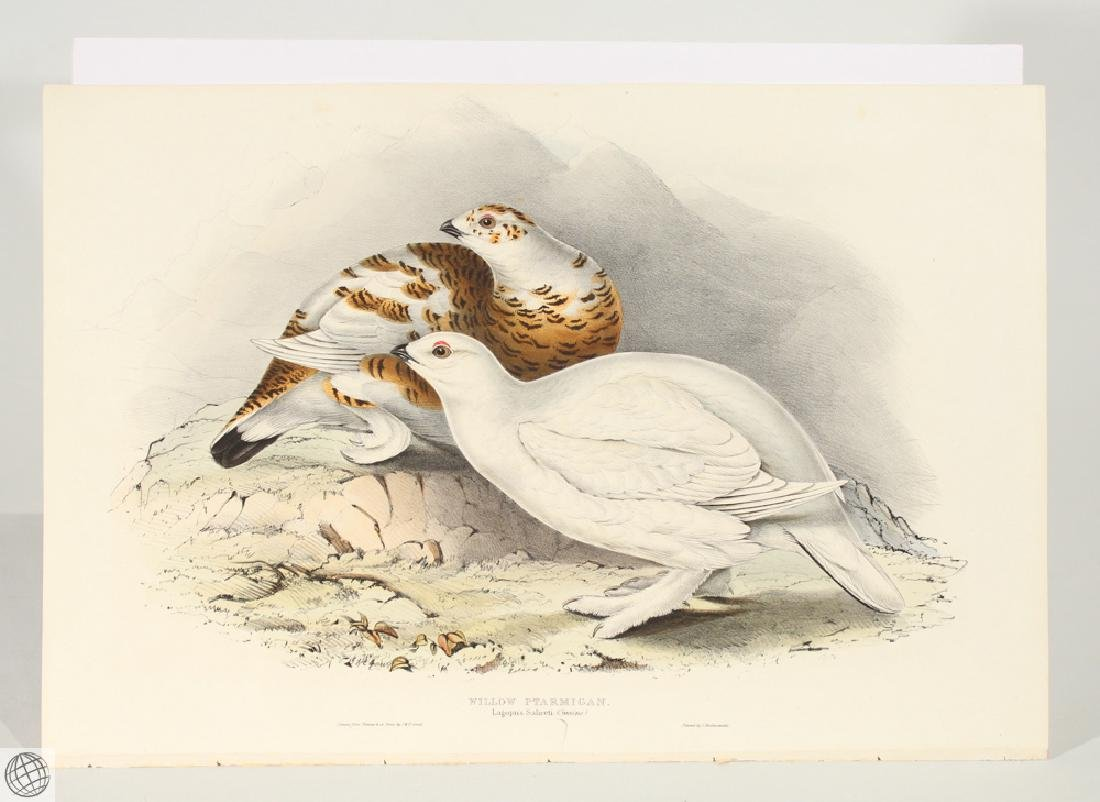 Willow Ptarmigan JOHN GOULD Hand Colored Lithograph