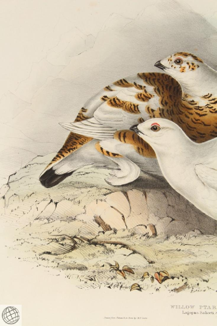 Willow Ptarmigan JOHN GOULD Hand Colored Lithograph - 3