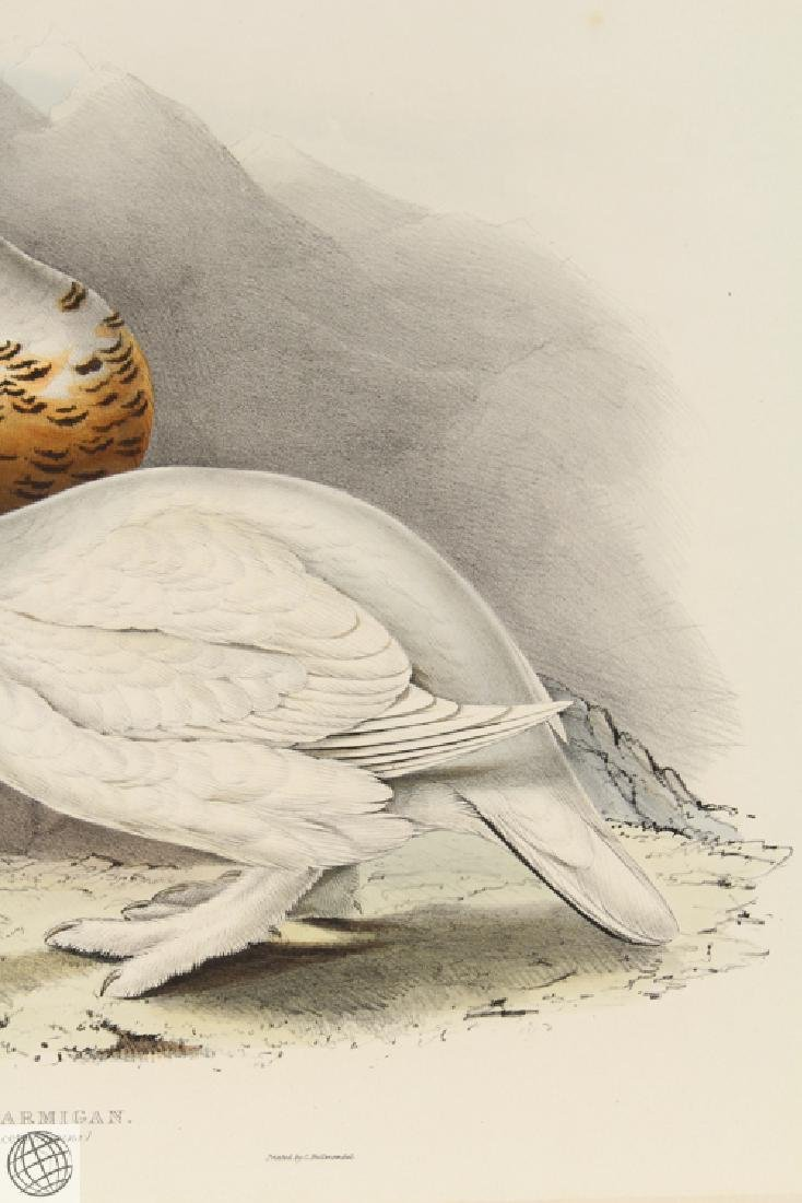 Willow Ptarmigan JOHN GOULD Hand Colored Lithograph - 4