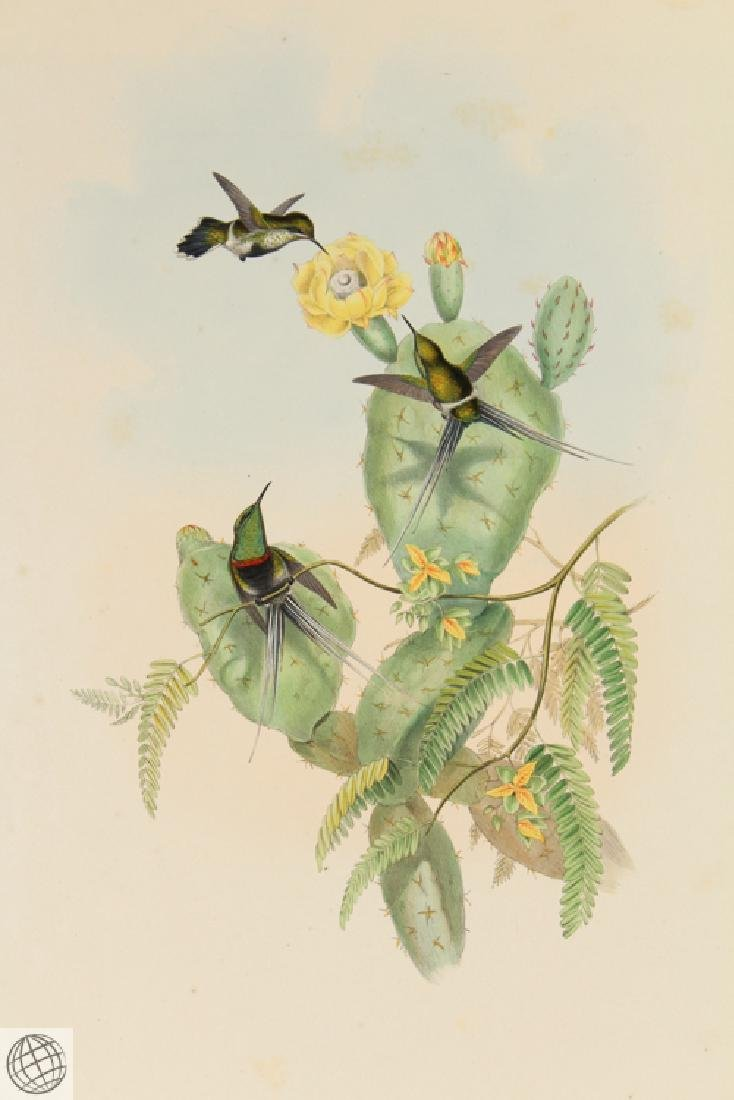 Langsdorff's Thorntail JOHN GOULD Hand Colored - 2