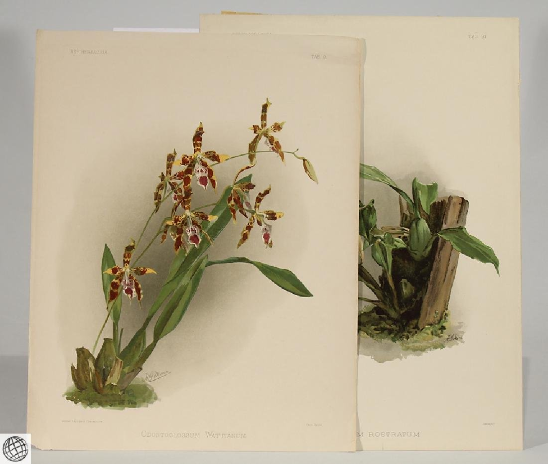 2Pcs Orchid Prints HENRY FREDERICK CONRAD SANDER