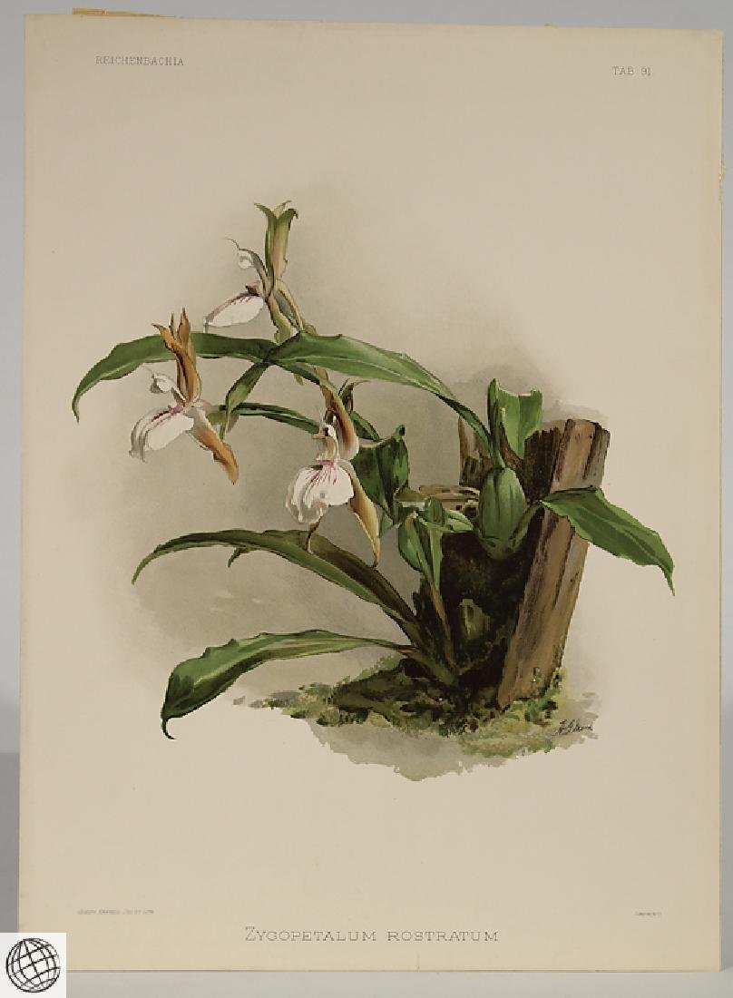 2Pcs Orchid Prints HENRY FREDERICK CONRAD SANDER - 2