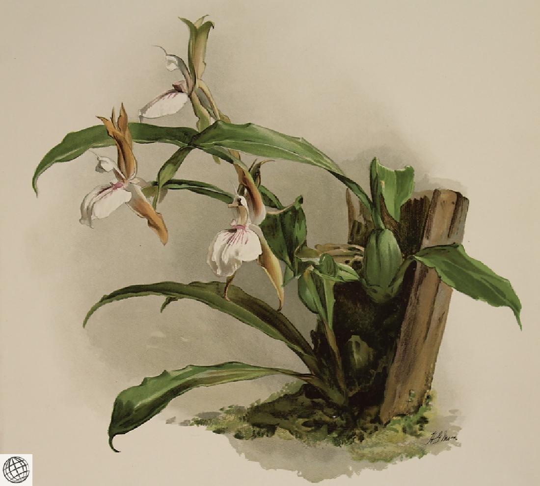 2Pcs Orchid Prints HENRY FREDERICK CONRAD SANDER - 3