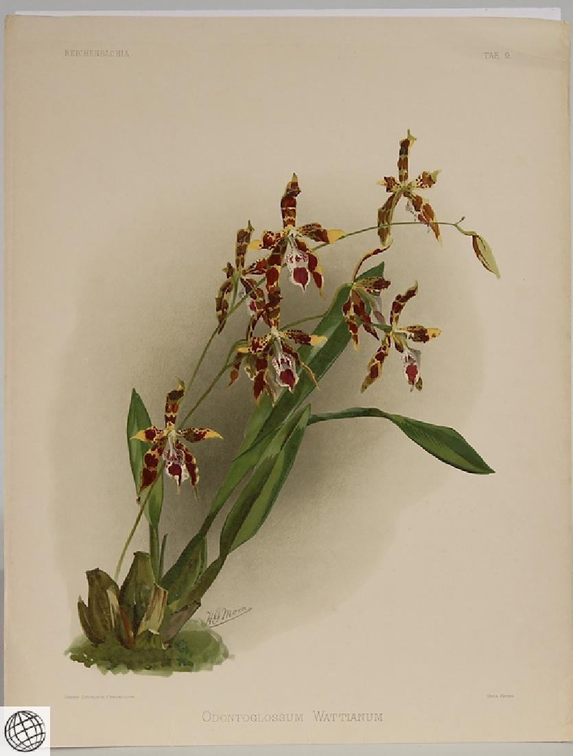2Pcs Orchid Prints HENRY FREDERICK CONRAD SANDER - 7