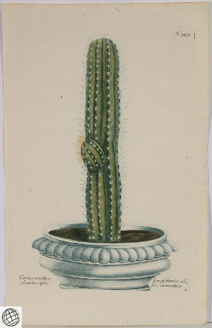 Thorny Cactus WEINMANN Hand Colored Engraving 18th C