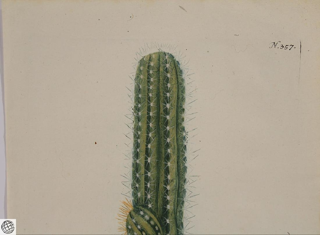 Thorny Cactus WEINMANN Hand Colored Engraving 18th C - 2