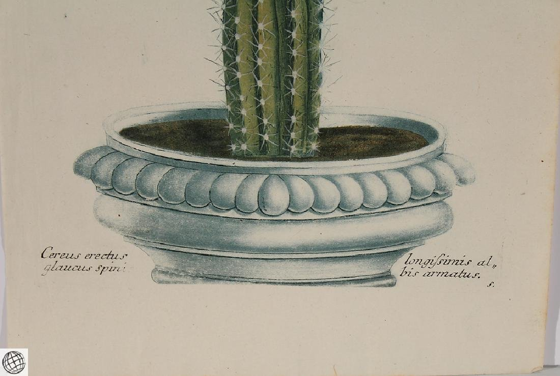 Thorny Cactus WEINMANN Hand Colored Engraving 18th C - 4