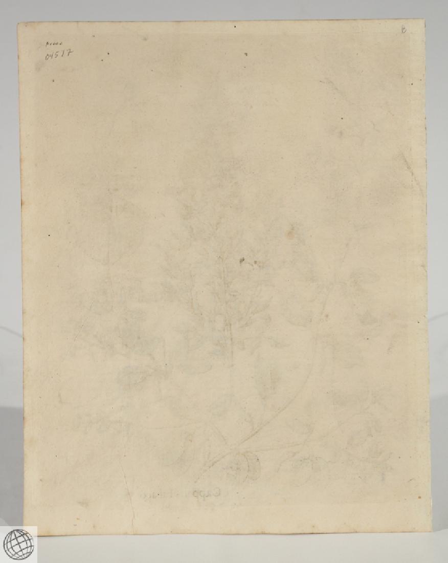 False Caper BASIL BESLER Hand Colored Engraving 1640 - 6
